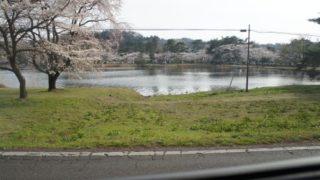 2013-04-14南湖公園桜1