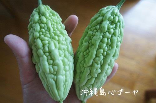 沖縄島心ゴーヤ