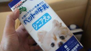 シニア犬ペットの牛乳