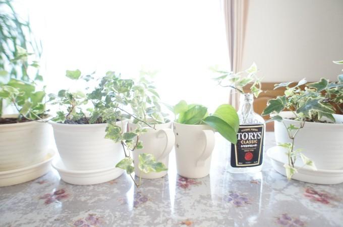 100均 観葉植物