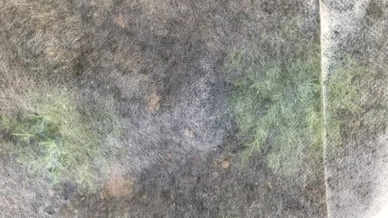 不織布 カモミール