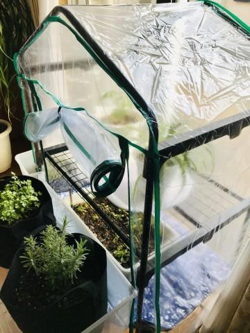 ビニール温室棚3段 室内